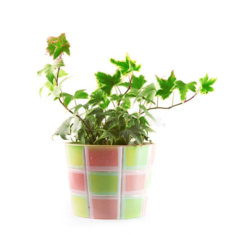 Pot met een bloem royalty-vrije stock afbeelding