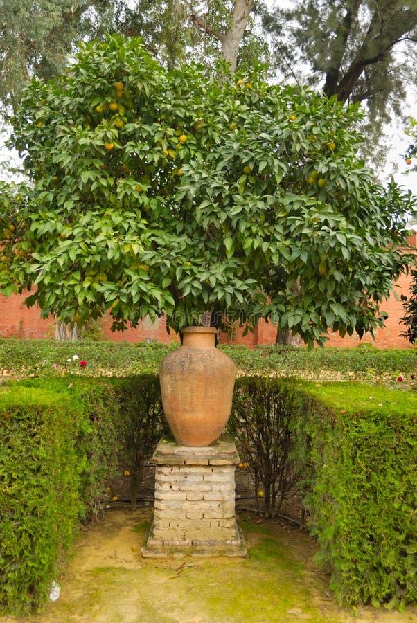Pot and orange tree stock photo