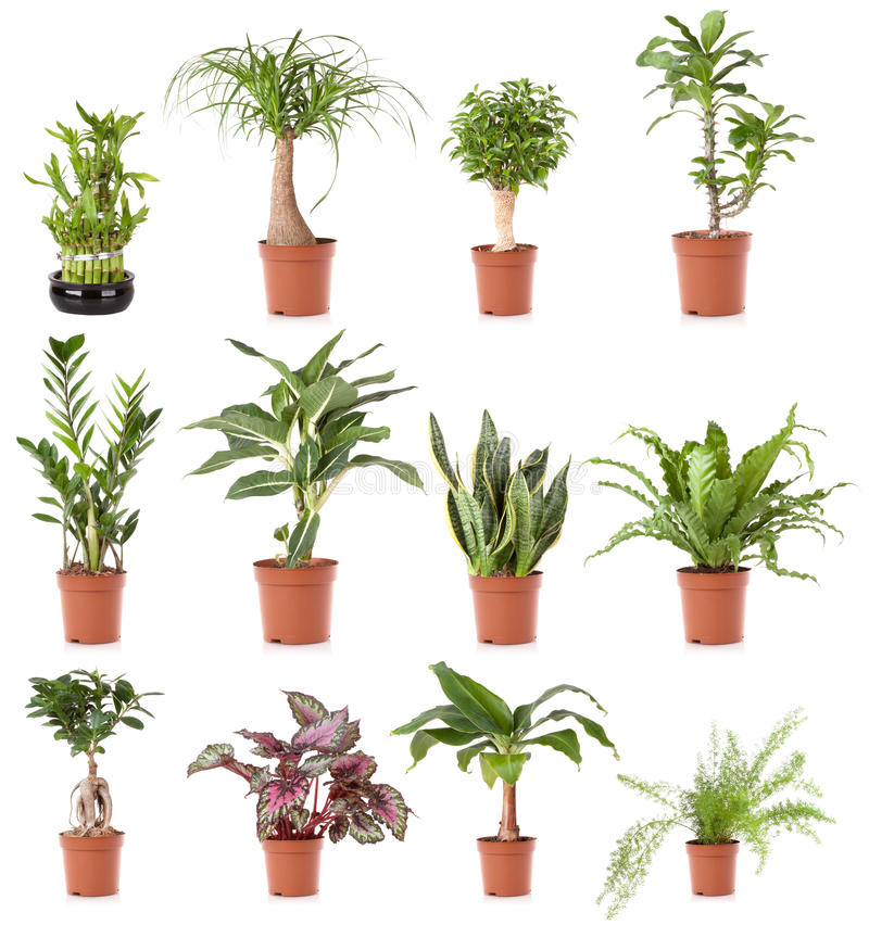 Pot plant house. House plant collection in pot, isolated