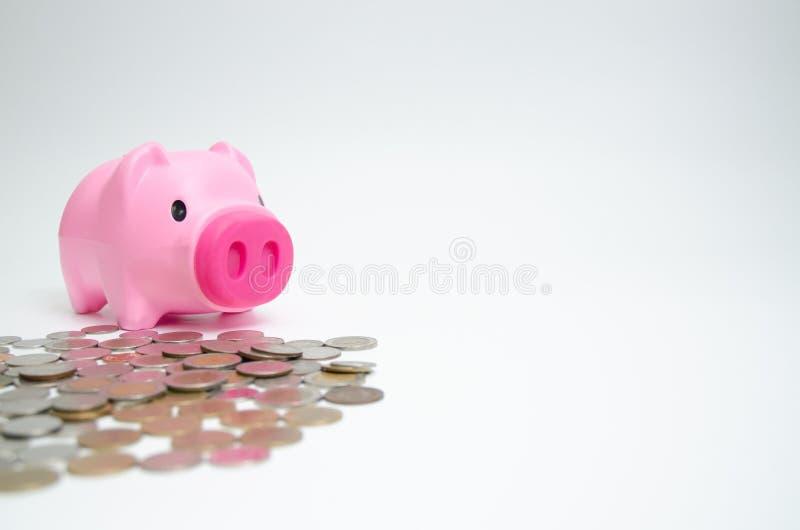 Pot rose de porc pour la pièce de monnaie photo libre de droits