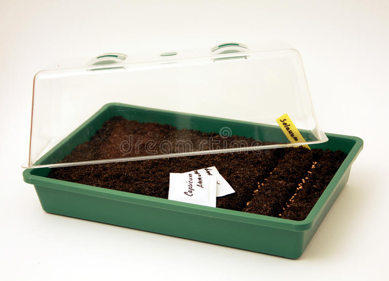 Pot for seeds sowing. Small greenhouse for seeds sowing and breeding young vegetable and flowers plants royalty free stock photography
