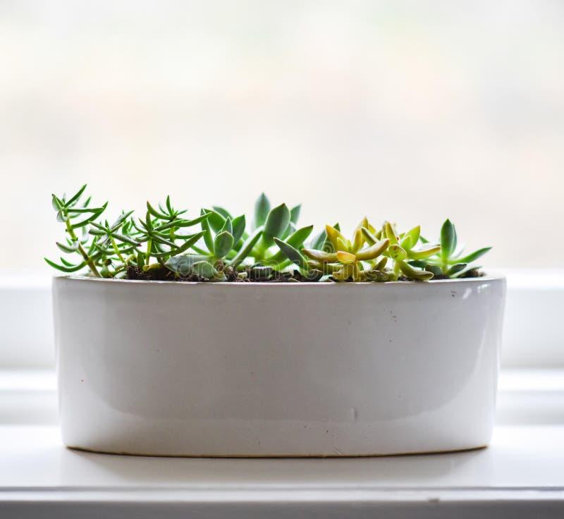 Pot With Succulent Plants Free Public Domain Cc0 Image