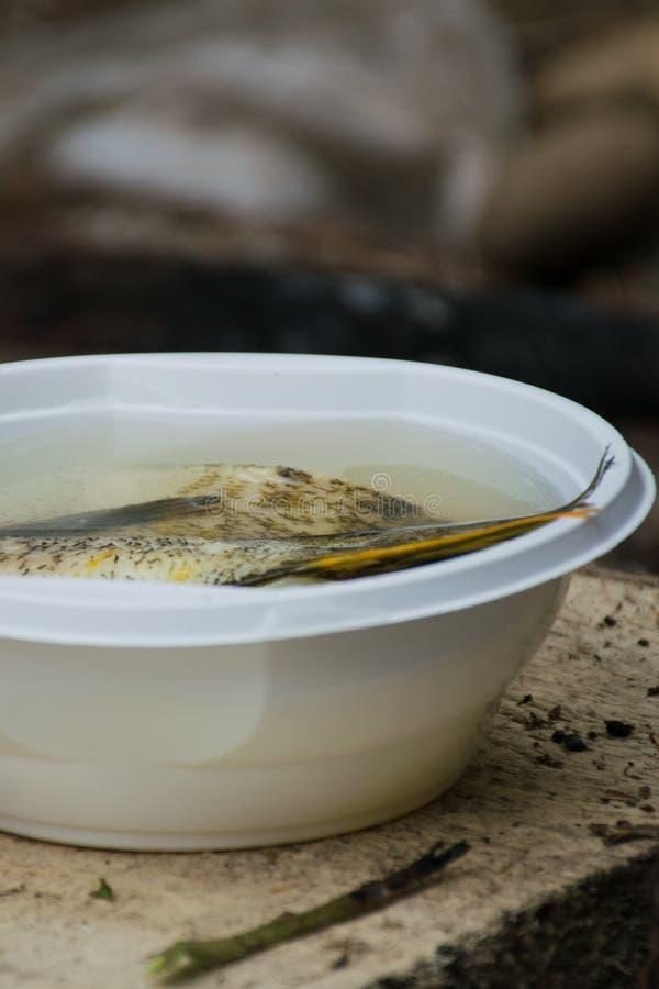 Pot van vissensoep die op de brand, een warme stille avond op de picknick worden voorbereid stock afbeelding