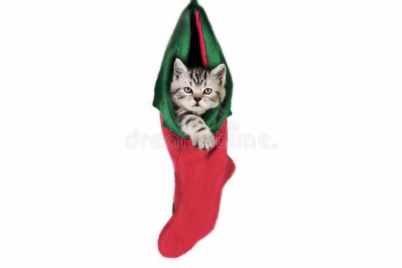 Pot voor Kerstmis. stock afbeelding
