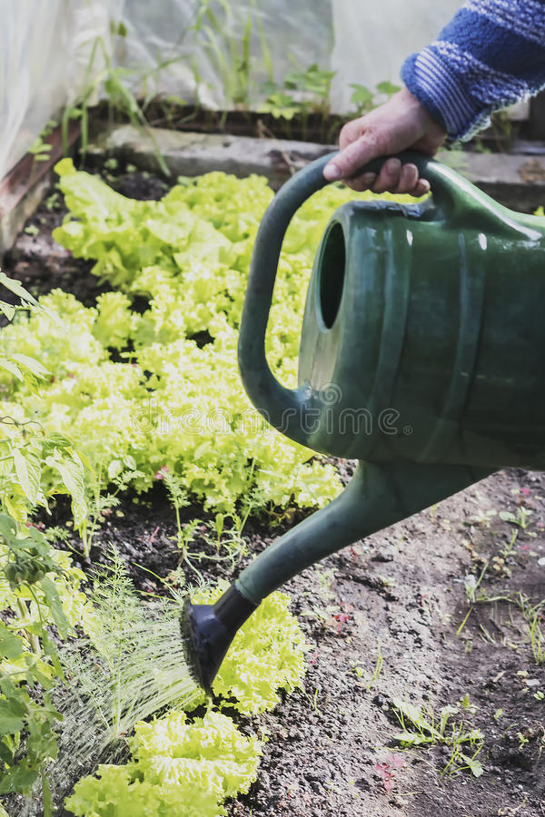 With a pot of watering my garden royalty free stock photography