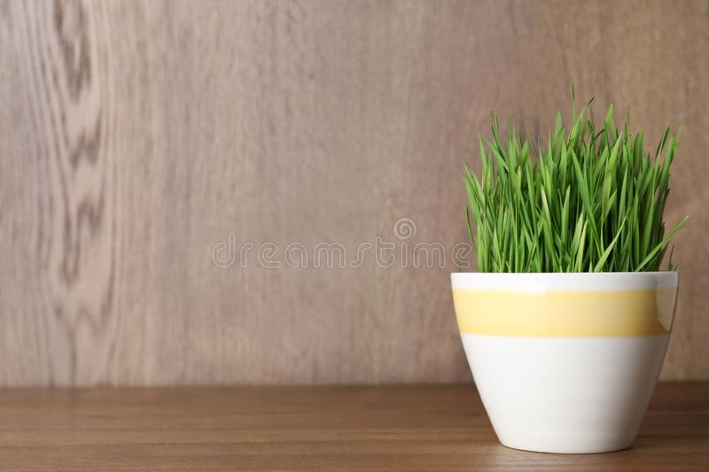 Pot with wheat grass on table against wooden background. Space for text royalty free stock images