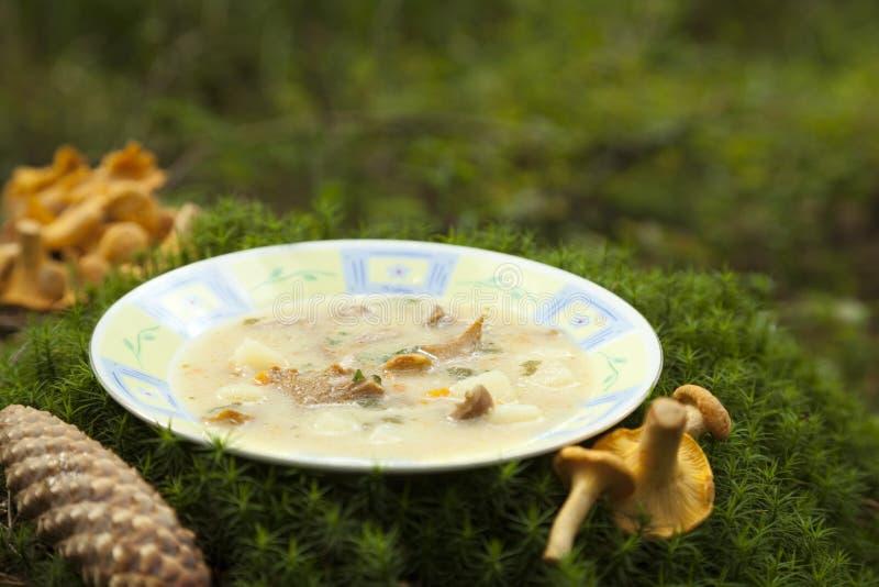 Potage crème avec des champignons de couche image stock