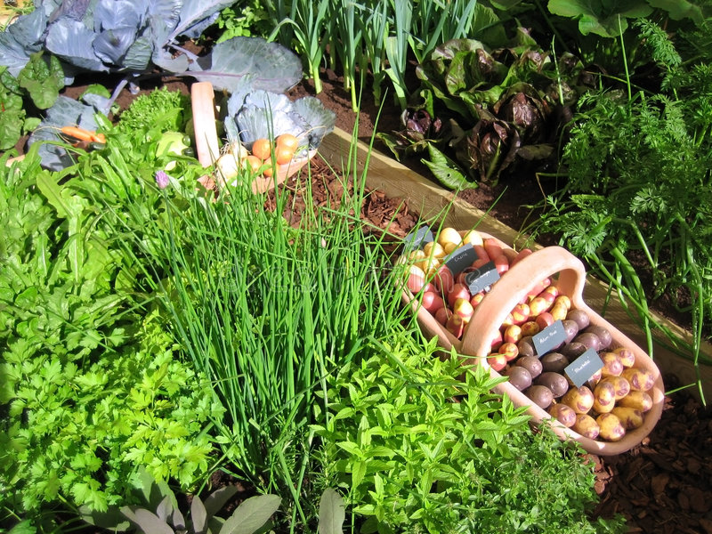 Potager photographie stock