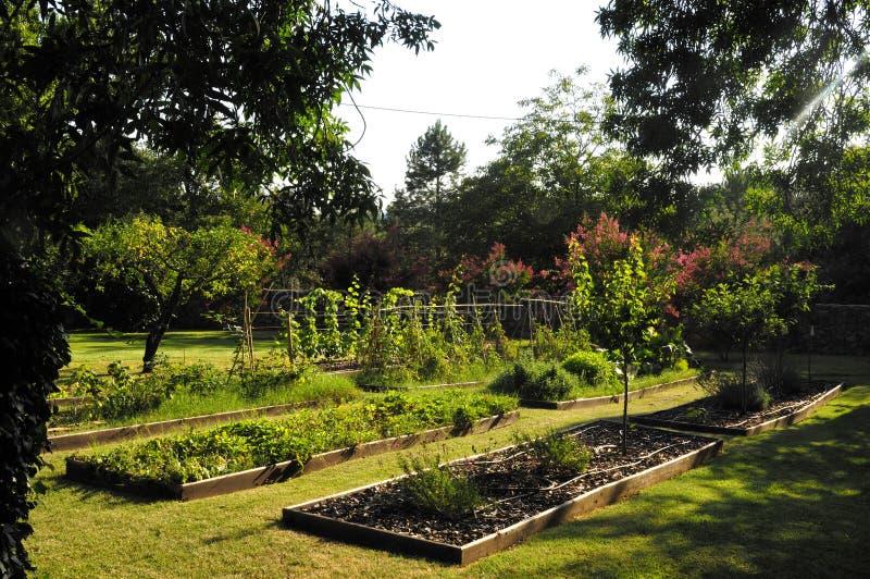 potager beau jardin avec des l gumes photo stock image du organisation dur e 61780188. Black Bedroom Furniture Sets. Home Design Ideas
