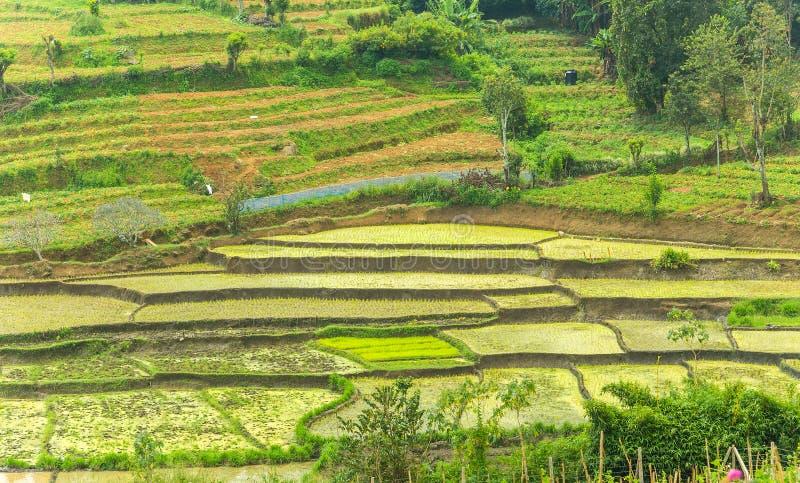 Potager, terrasses vertes de gisements de riz photos stock