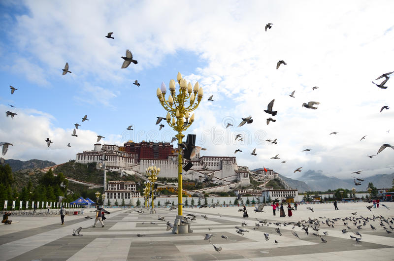 The potala palace with doves. The potala palace is the palace of the dalai lama, has the very high status in Tibet, its construction on a mountain, also is the royalty free stock photography