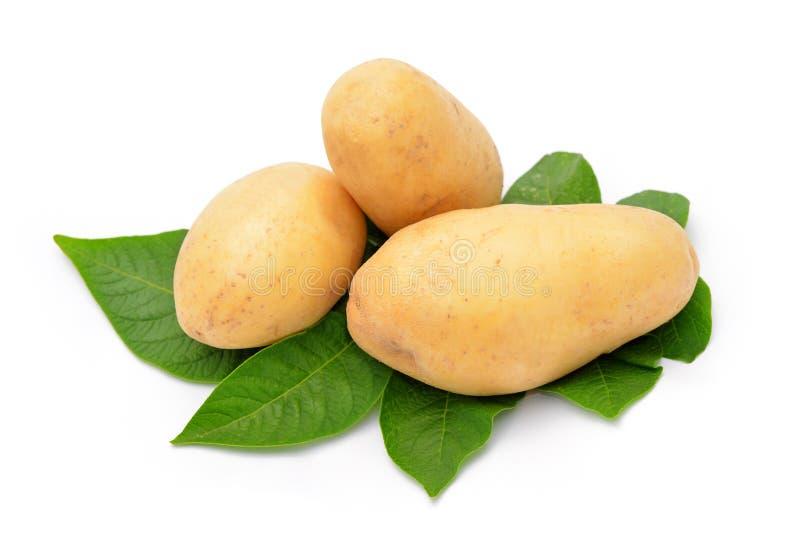 Potatis arkivfoton