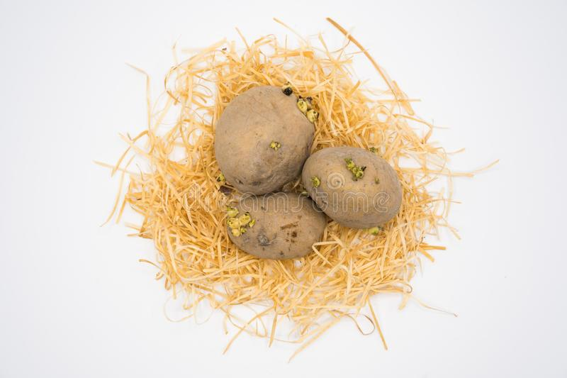 Potatis p? redet med vit bakgrundsskytte i studio arkivbilder