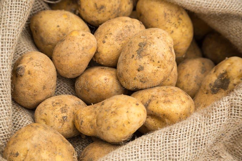 Potatisar i säck arkivbild
