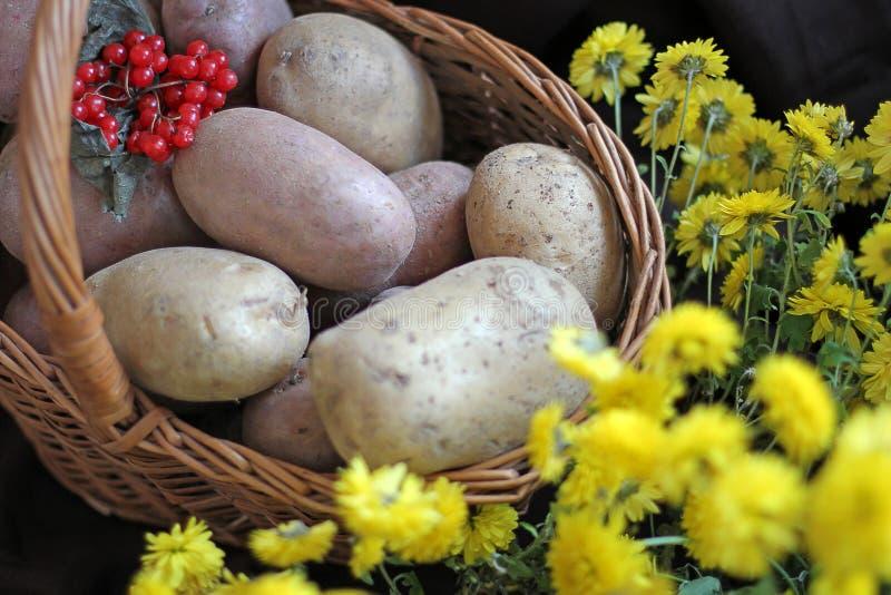 Potatisar och viburnum i en korg Begreppsmässigt skörddiagram med olika grönsaker på fältet Skörd arkivfoton