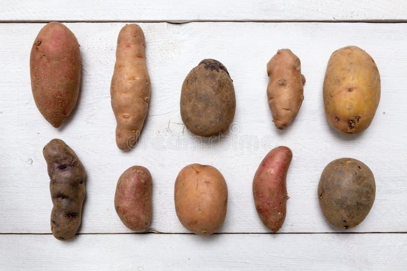 Potatisar på det vita träbrädebegreppet royaltyfria foton