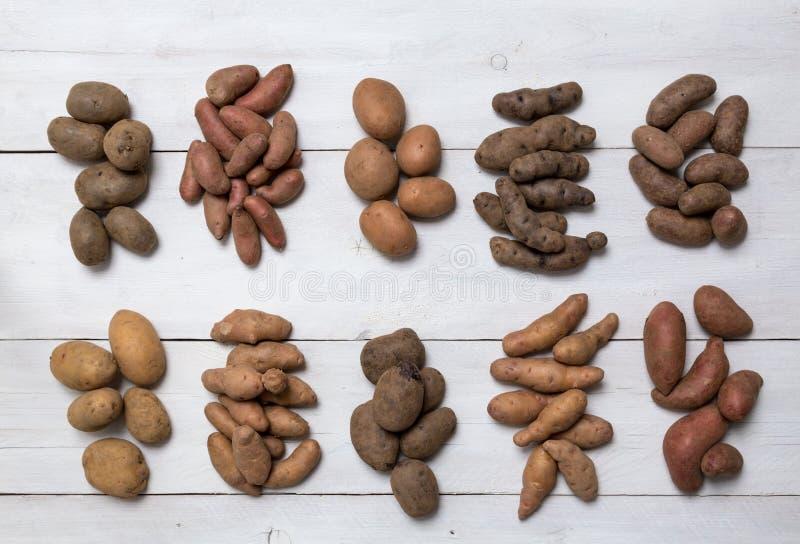 Potatisar på ett vitt träbrädebegrepp royaltyfria foton