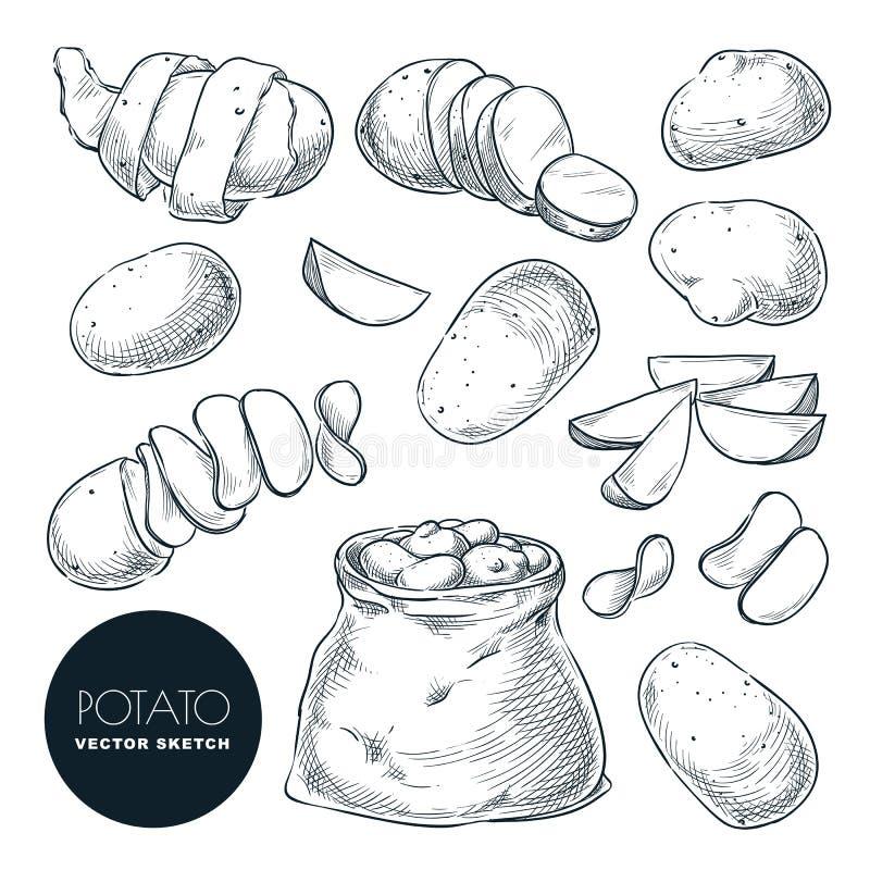 Potatisar skissar vektorillustrationen Potatisskörd i säck För jordbruk- och lantgårddesign för hand utdragna beståndsdelar vektor illustrationer