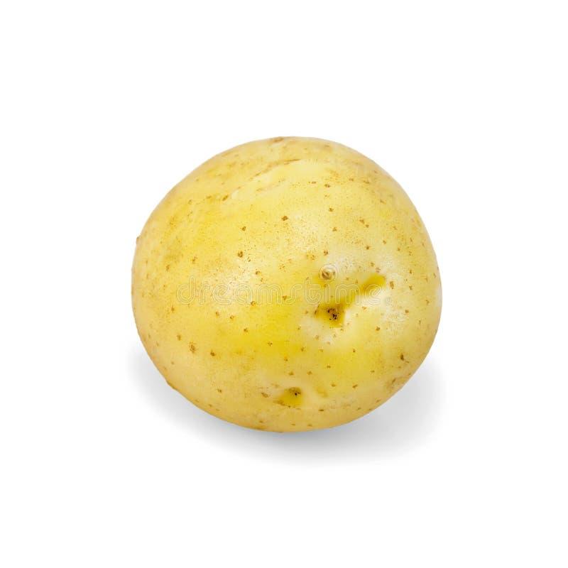 Potatisguling en royaltyfria bilder