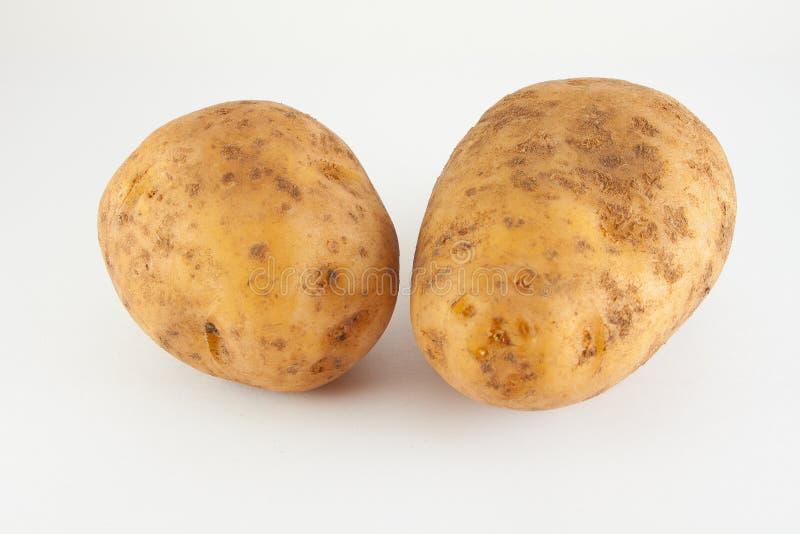 Potatisknöl 2 rå stycken arkivfoto