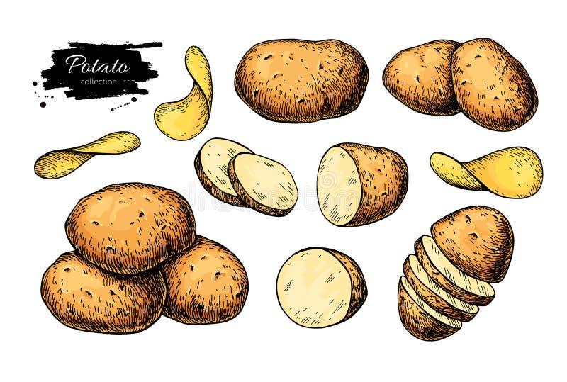 Potatisteckningsuppsättning Vektorn isolerade potatisar överhopar, skivade stycken och chiper grönsak royaltyfri illustrationer