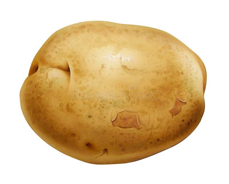 Potato stock illustration