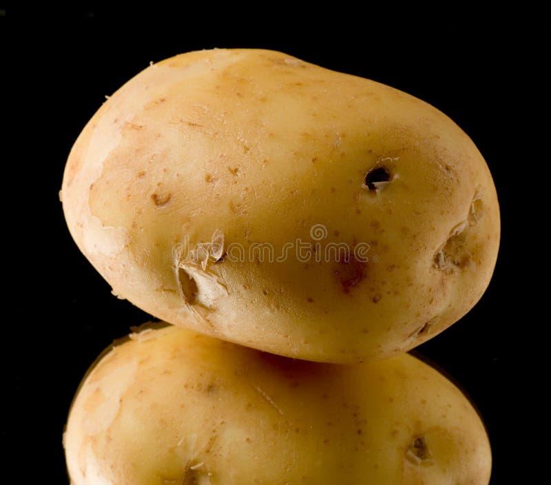 Potato royalty free stock image
