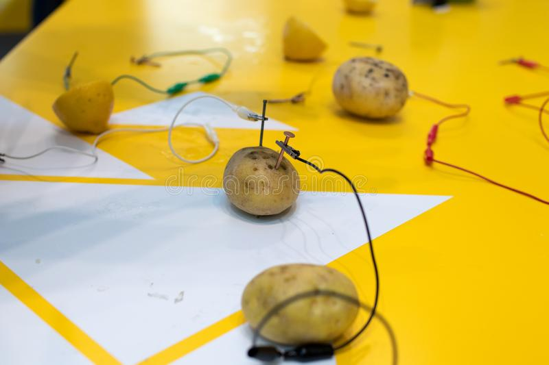 Potato battery STEM activity with potatoes, lemons, alligator cl. Ips, zinc and copper nails. Natural battery to turn on a led. scientific experiment for royalty free stock image