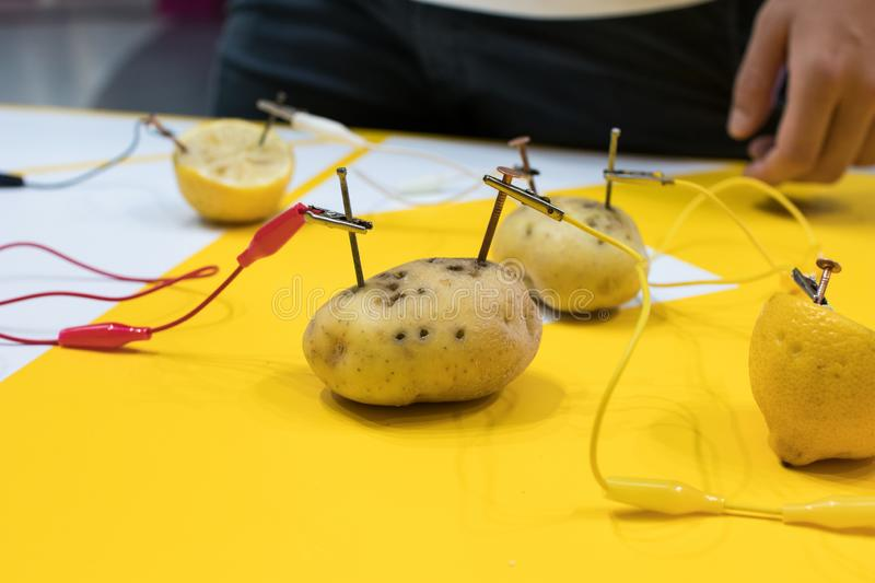 Potato battery STEM activity with potatoes, lemons, alligator cl. Ips, zinc and copper nails. Natural battery to turn on a led. scientific experiment for stock photography