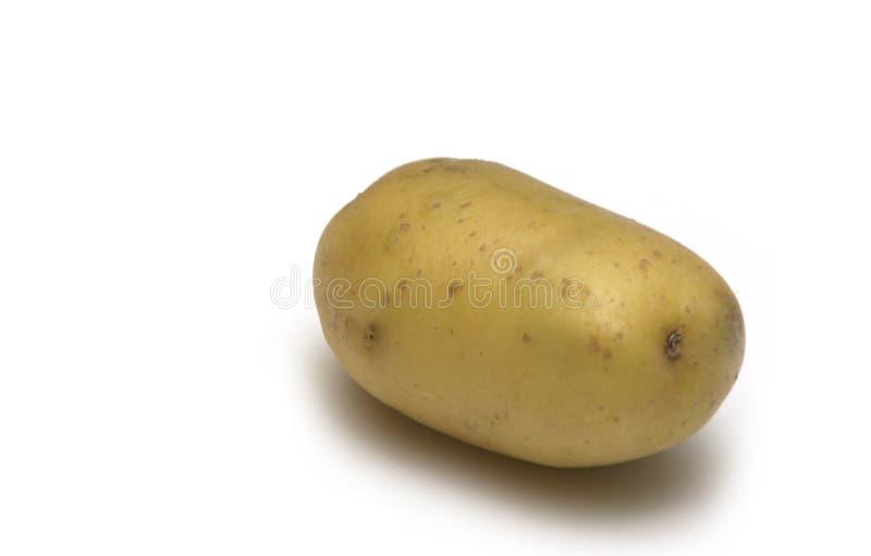 potato białe tło zdjęcia royalty free