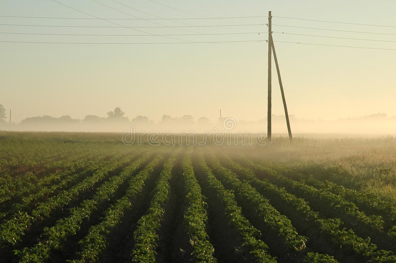 Download Potato field stock image. Image of farm, agriculture - 23289281
