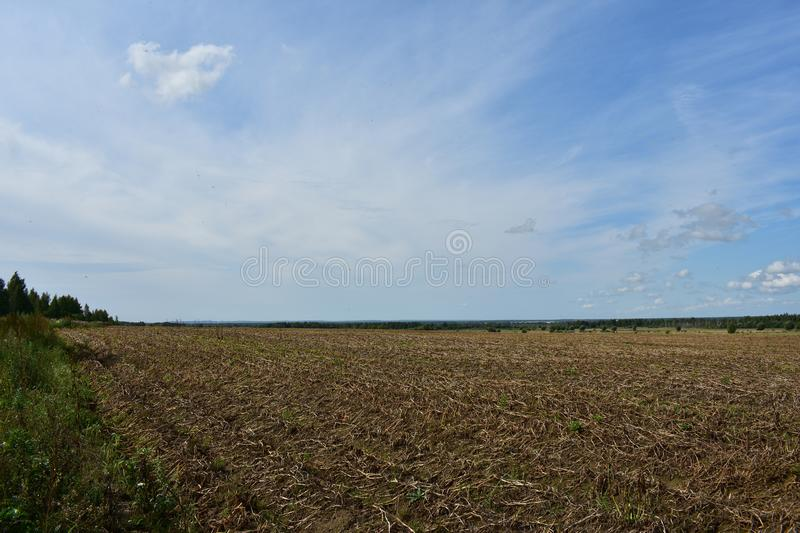 Potato field of grass, away solitary trees and forest, sky cloud. High on the horizon stock image