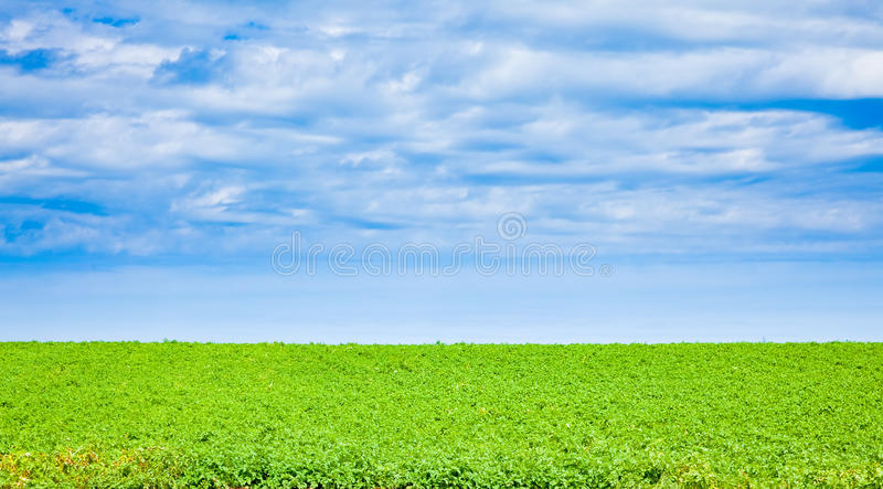 Potato Field In PEI Royalty Free Stock Images