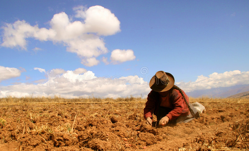 Download Potato Harvest In The Andes Stock Image - Image: 4130395