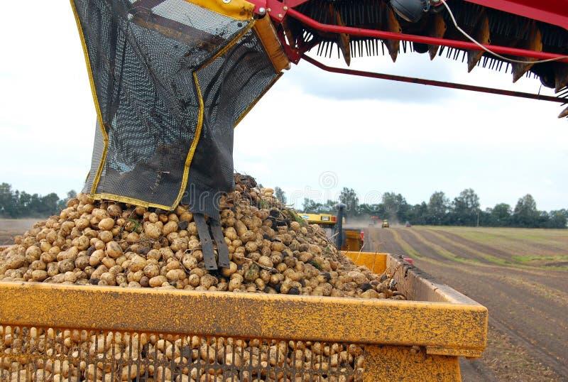 Potato harvesting stock photography