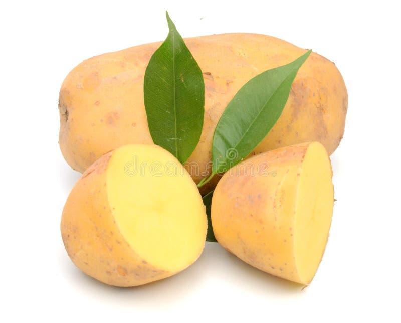 Potato. Raw Potato and Sliced Potato. Sweet, eating stock images