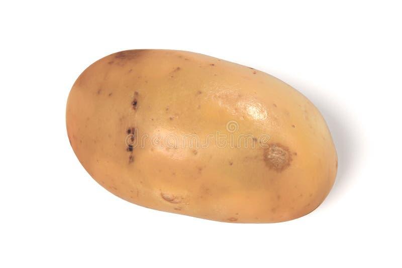 Potato. Realistic 3d render of potato royalty free illustration