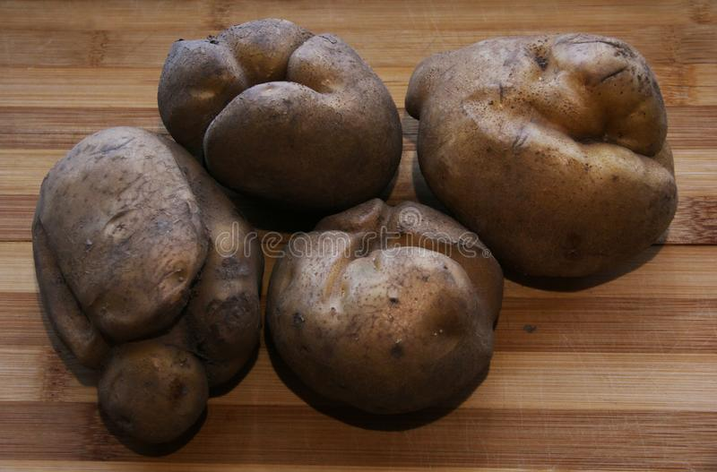 Potato sculptures. Potatoes of irregular shape, grown under adverse conditions in the form of fantastic figures royalty free stock photos