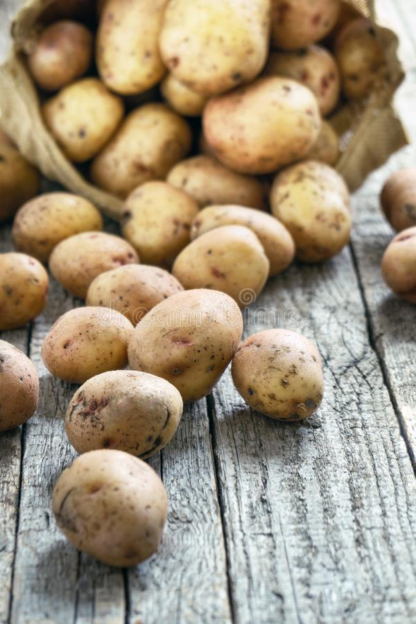 Potato tubers scattered on the rough wooden boards from a burlap sack on the background royalty free stock photography