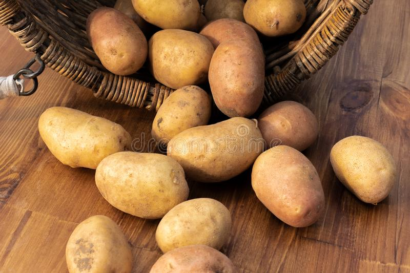 Potato tubers on wooden table royalty free stock images
