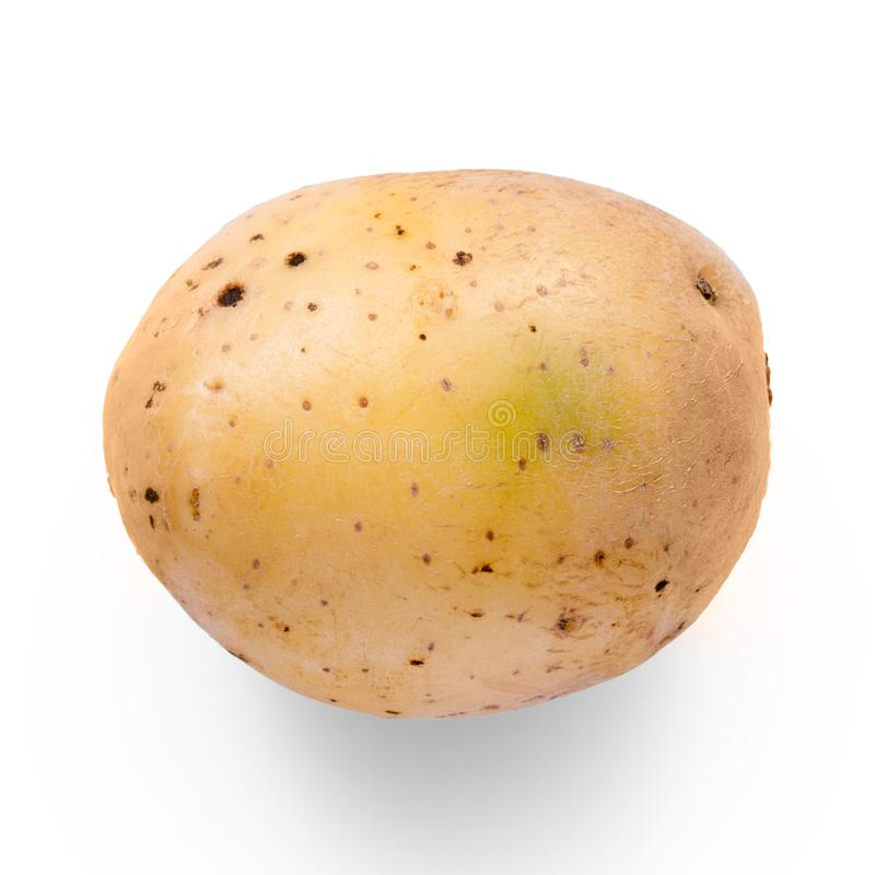 Potato vegetable royalty free stock photography