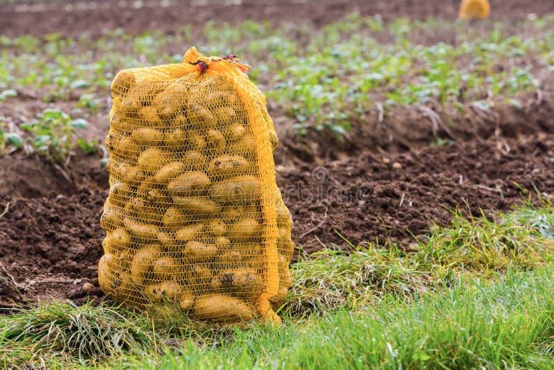 Potatoe torba zdjęcie stock