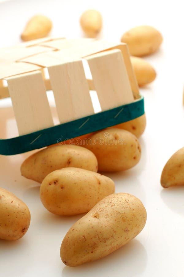 Potatoes. stock image