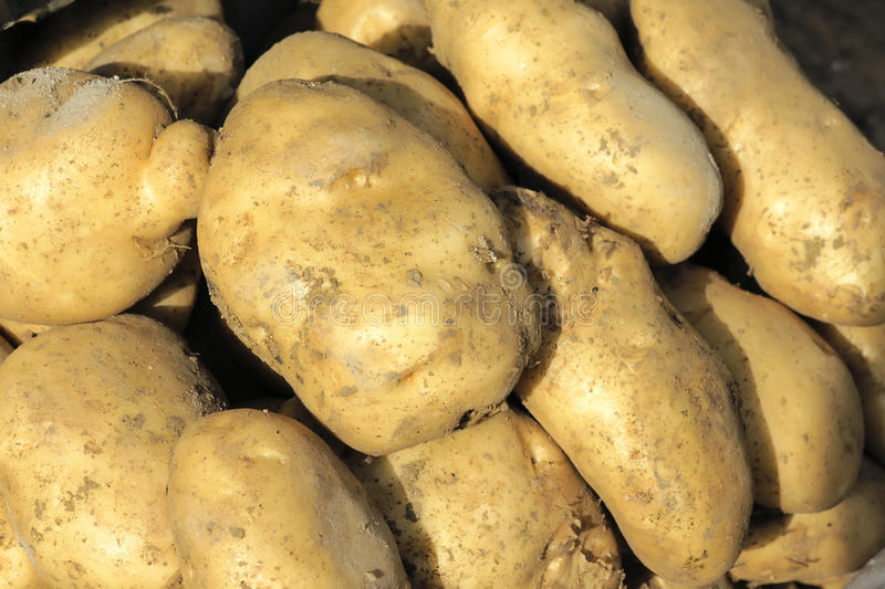 Download Potatoes stock photo. Image of vegetables, spud, eating - 19547100