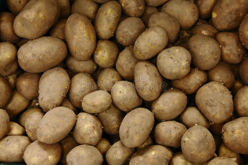 Potatoes stock photos