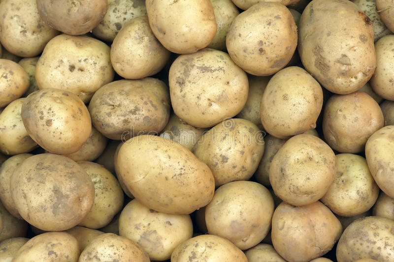 Download Potatoes stock photo. Image of food, dirt, greenstuff - 20310148