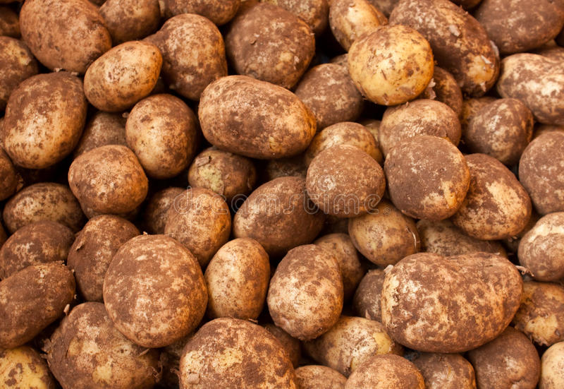 Download Potatoes stock image. Image of food, agriculture, many - 22914781