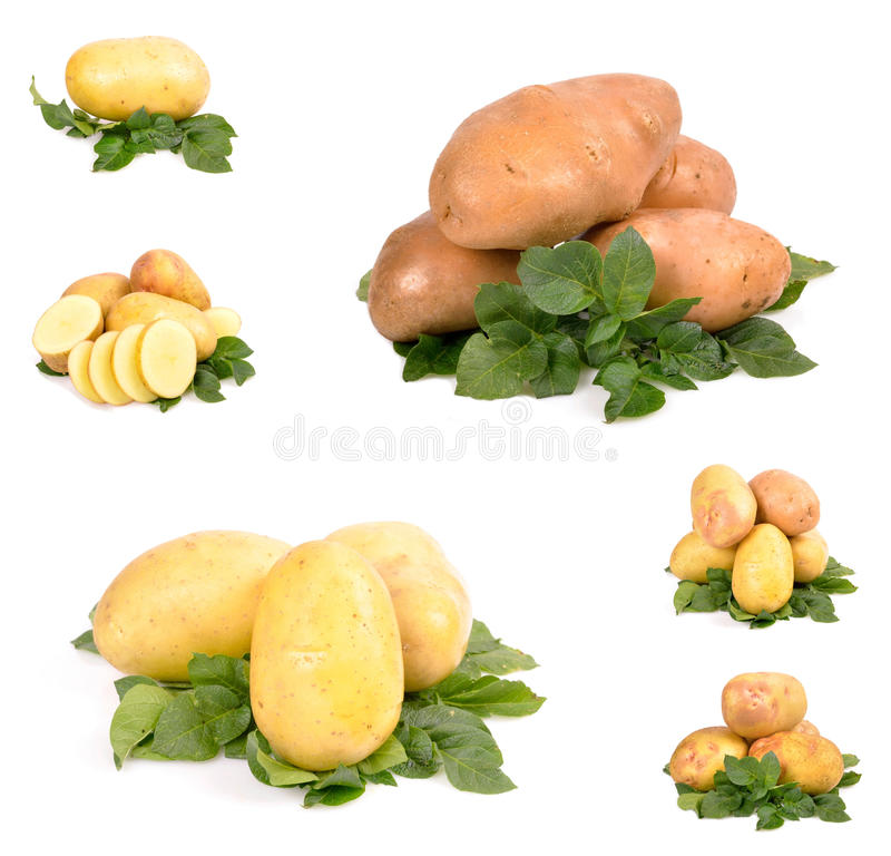Download Potatoes stock photo. Image of feeling, organic, healthy - 26528724
