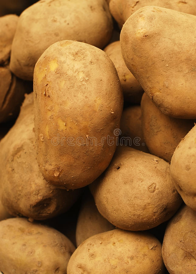 Download Potatoes stock photo. Image of many, fresh, harvest, grocery - 27737768