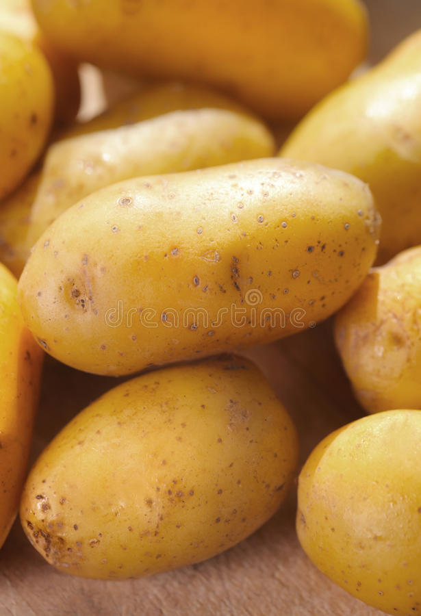 Download Potatoes stock photo. Image of yellow, close, ingredient - 29328572
